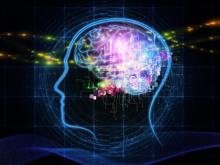 Immagine del cervello